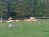 erkin-laidun-pihlajanmarjat