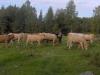 isanta-ja-karjaa