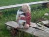 kissan-hoivaaja